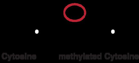 DNA_methylation.png