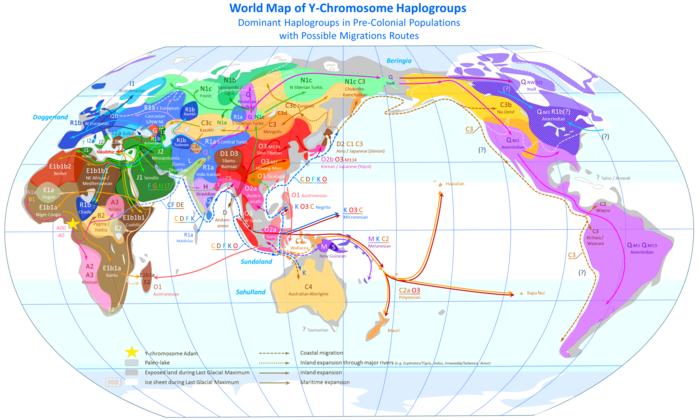 Y-DNA_Haplogroups.png