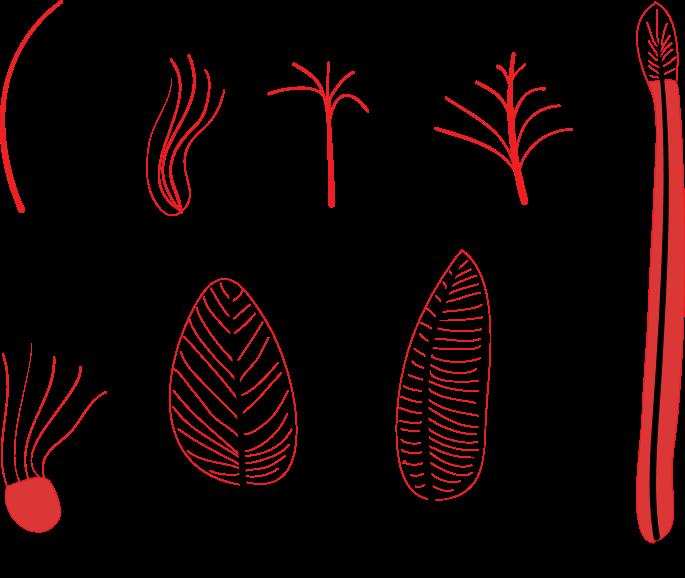 羽毛の発達史