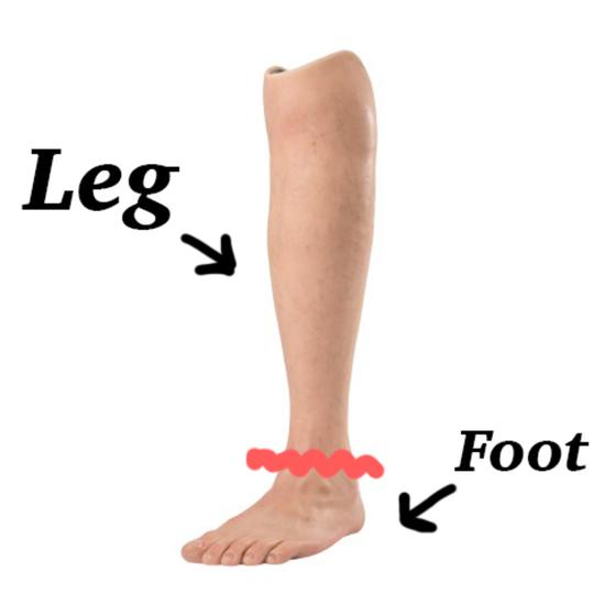 foot-leg.jpg