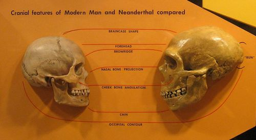 homo_neanderthal.jpg